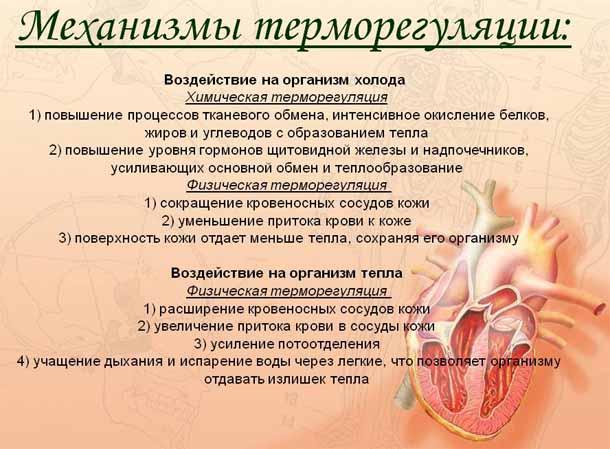 Умеренная гипотермия.